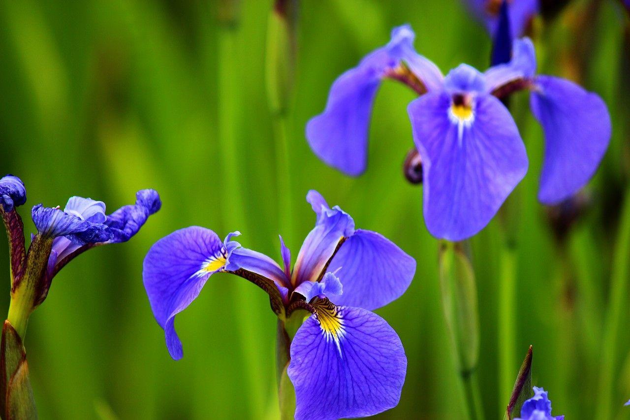 ロイヤルブルーの美しさを体感するには、少しうす曇りの光が最適です!