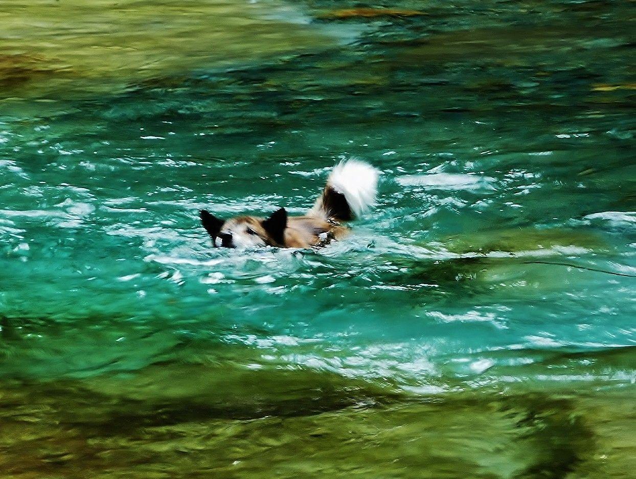 人間ばかりじゃないよ!ワンちゃんだって泳いじゃう♪
