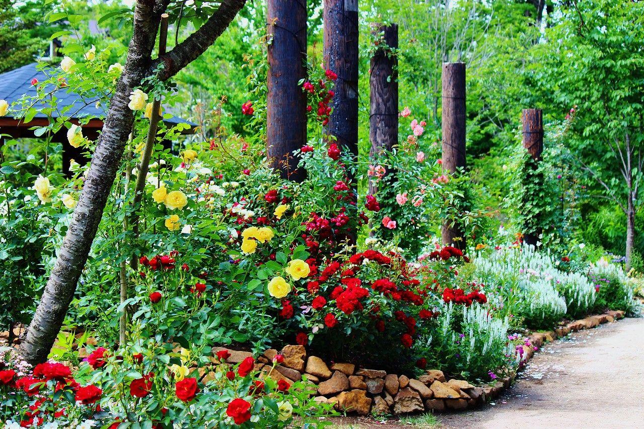 """ガーデン(試験圃場)の雰囲気を""""フォトムービー""""で味わってください!"""