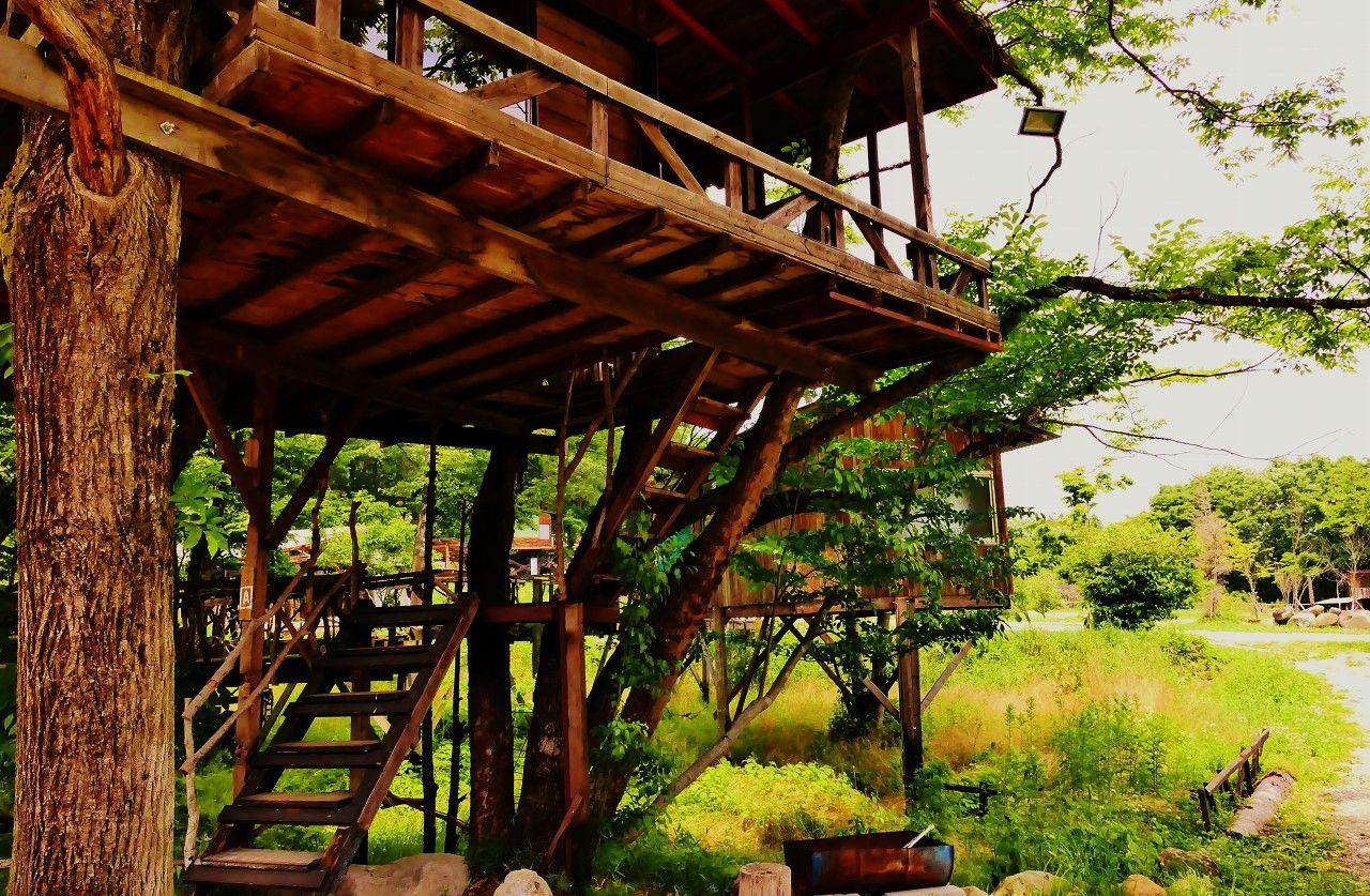 乃木坂46のMV「初恋の人を今でも」はこのツリーハウスで撮影