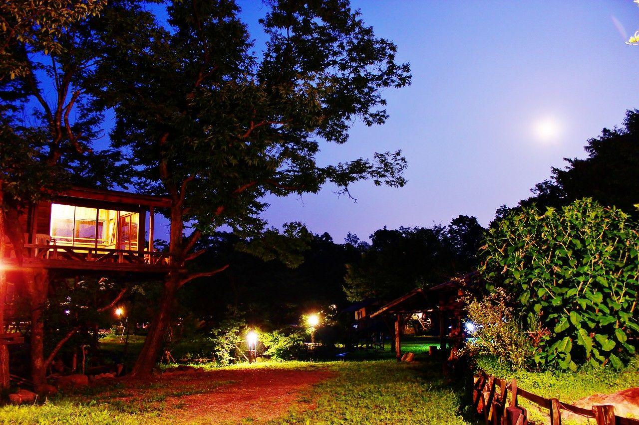 夜は那須高原の満点の星空が楽しめるツリーハウスサイト