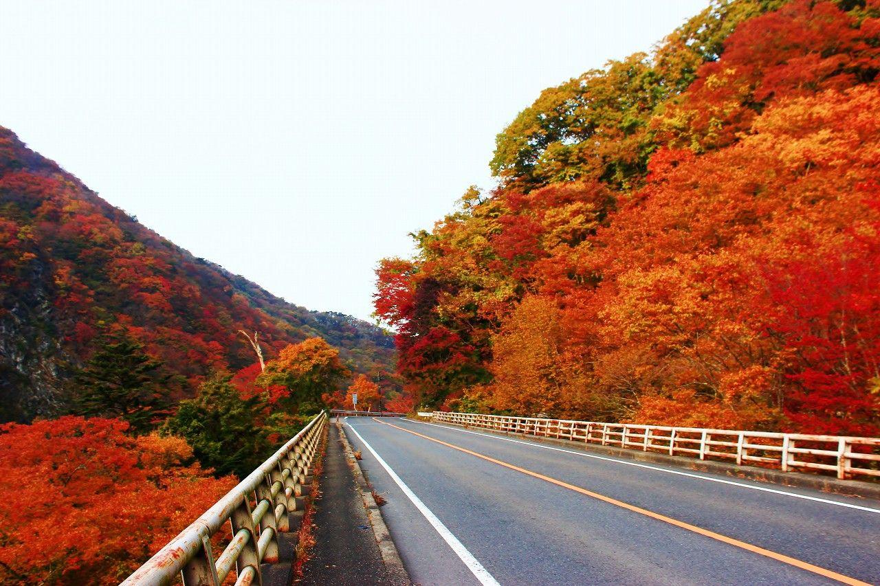 ため息が出るほど延々続く紅葉の渓谷街道!塩原バレーライン