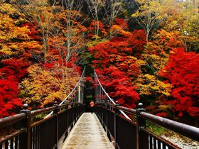 絶景紅葉の撮影スポット!那須塩原温泉「紅の吊り橋」が凄い