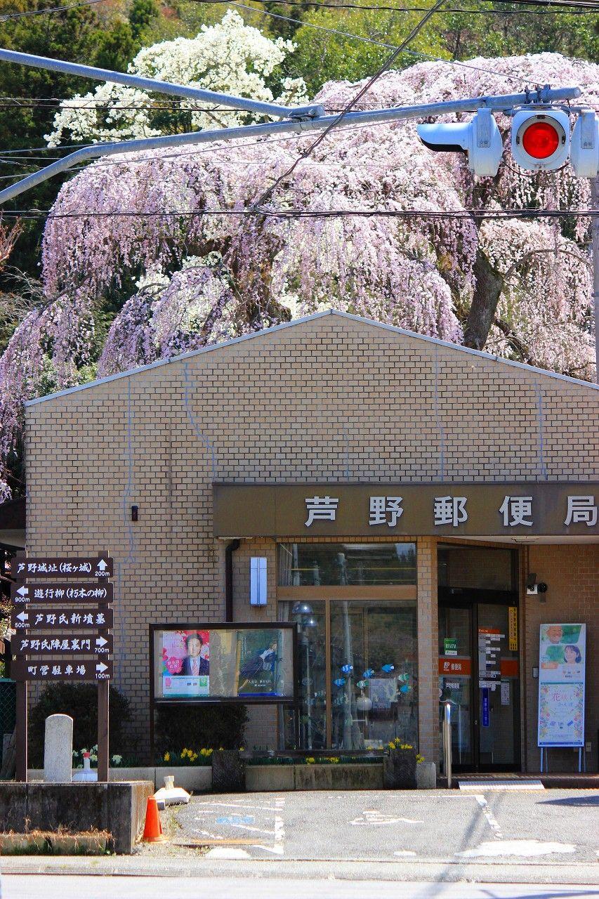 絶景!那須高原芦野の「桜ケ城」...