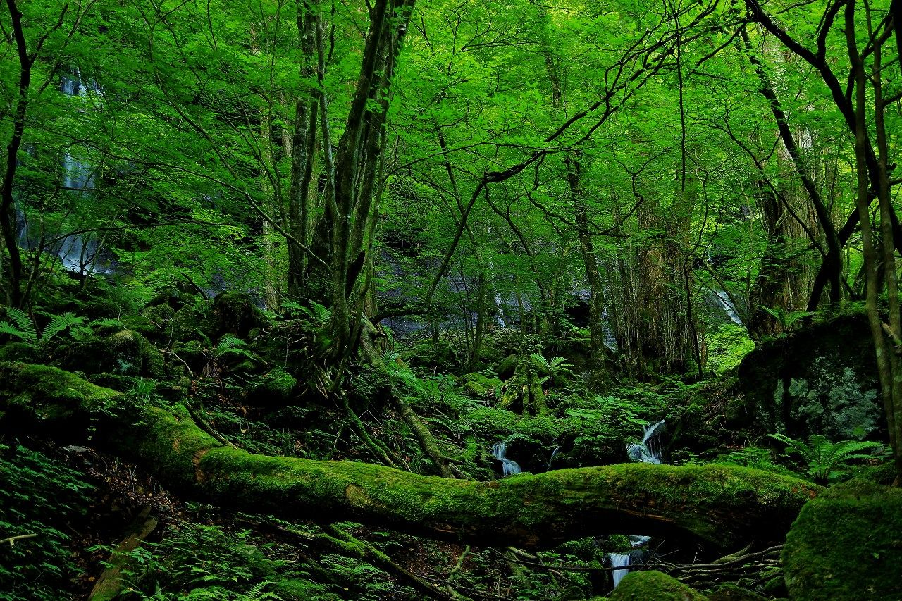 まるで屋久島みたいな苔の森と「素簾の滝」に癒されて!