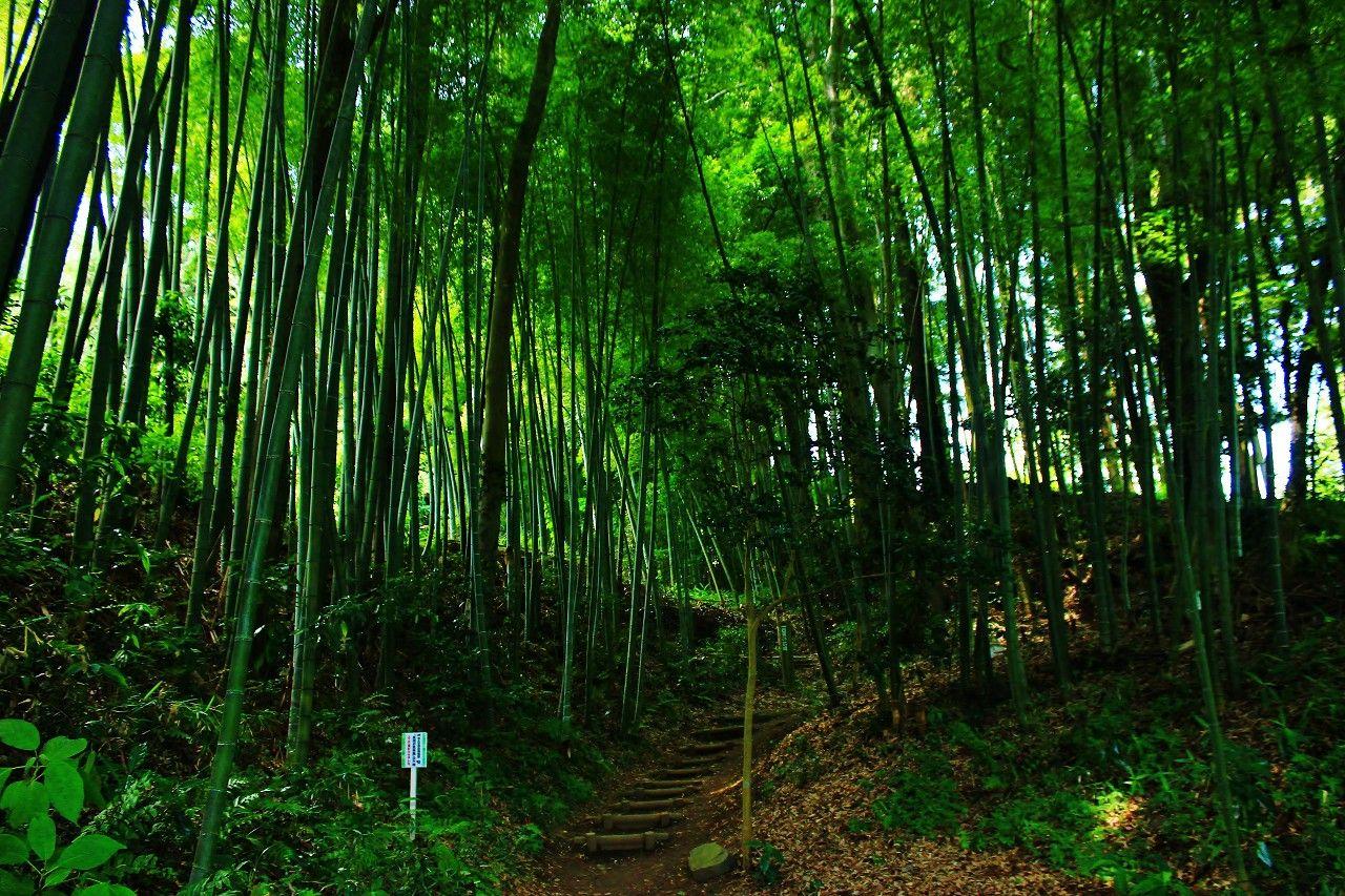 青モミジだけじゃない!吉永小百合さんも歩いた「芭蕉の道の竹林」