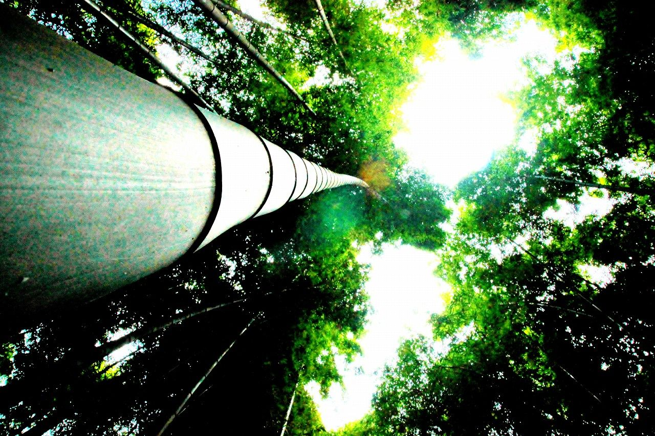 悠久の謎の歴史に佇む、もうひとつの那須・芦野「唐木田の竹林」
