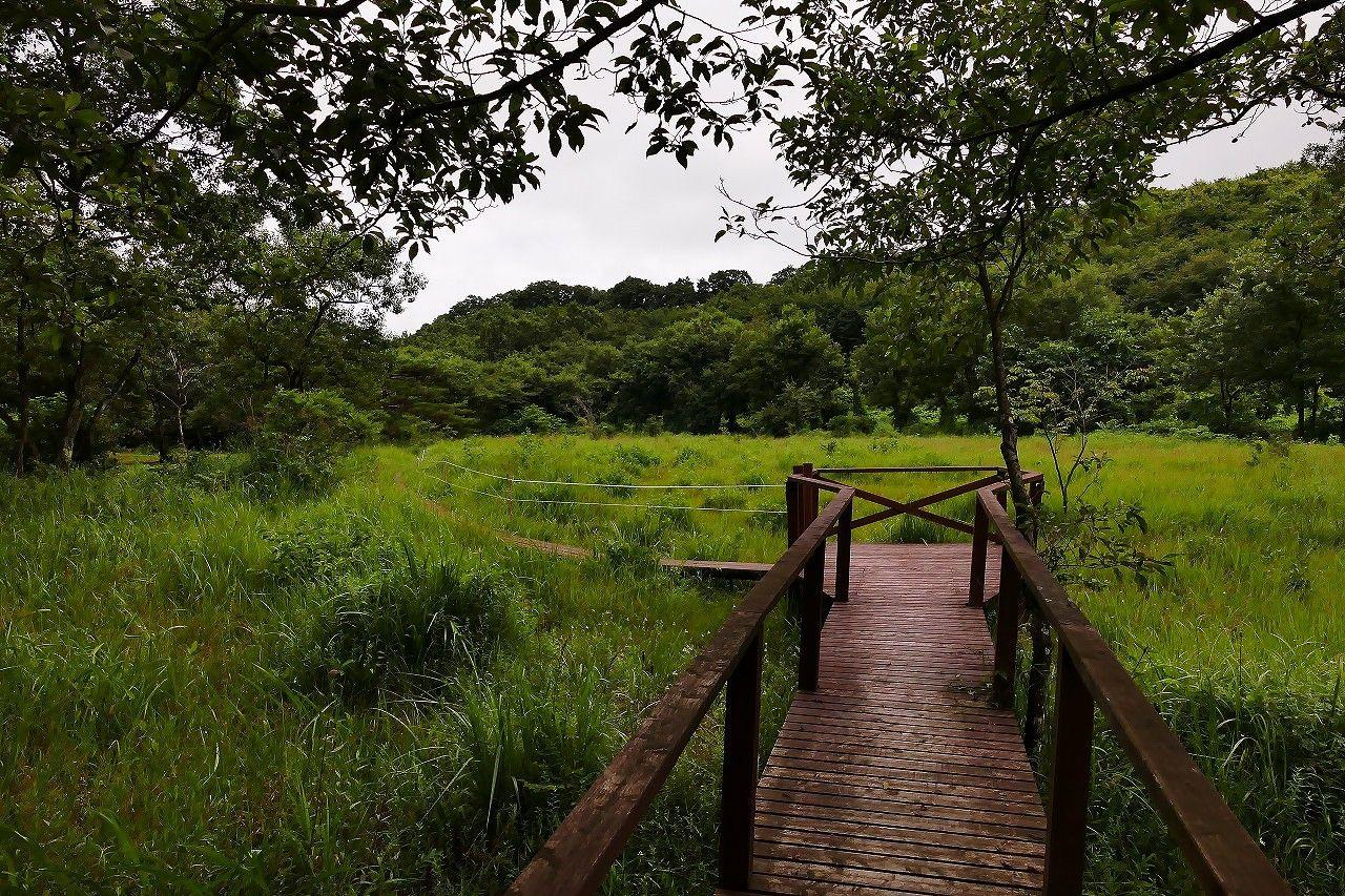笹平湿地は地域住民の皆さんの手により守られています。