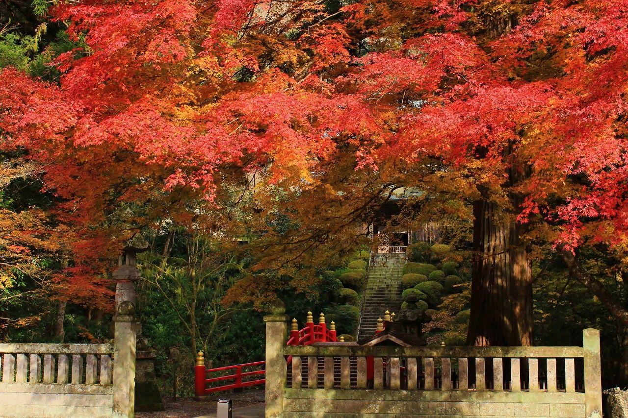 寺の裏手の紅葉も見逃さないでください!
