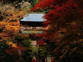 那須高原の禅古刹「雲厳寺」は歴史ロマンの紅葉映えが凄い!