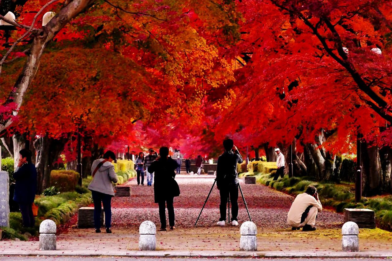 秋のおわりに紅葉映えのメッカになる「大山公園参道」