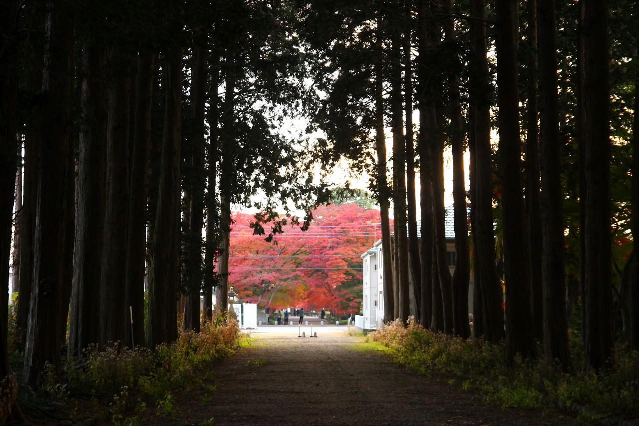 真っ赤な紅葉を見守る様に「大山巌の眠る」墓所があります