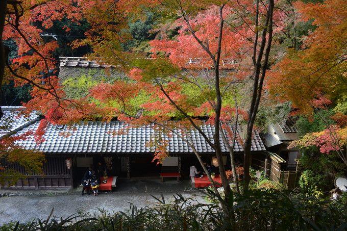 平野屋の紅葉