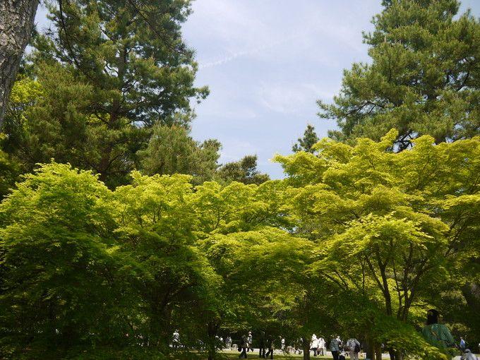 まばゆい新緑
