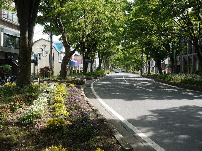 上諏訪駅前のケヤキ並木道
