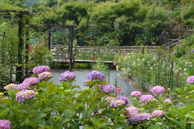 境内の花々は梅雨時が見頃!福井の名寺「大安禅寺」