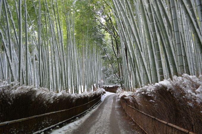 千二百年前から変わらない「京都嵯峨野」の雪景色で、時を忘れよう!