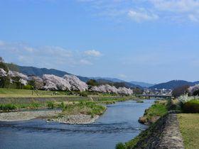 満開の桜ならおしゃれな京都北山エリアで!春爛漫の一日を満喫しよう