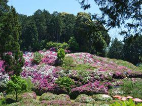 息をのむ艶やかさ!京都・花の寺「三室戸寺」2万株のつつじを見逃すな