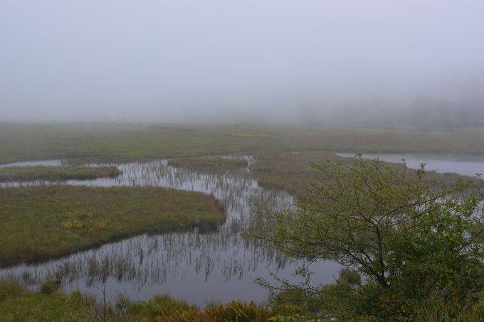 八島ヶ原湿原(ビーナスライン)