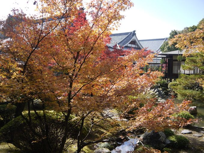 錦秋の大覚寺境内