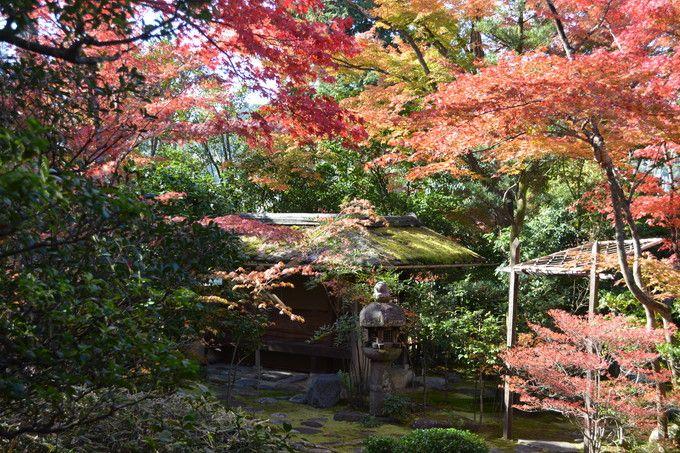 露地庭園の紅葉