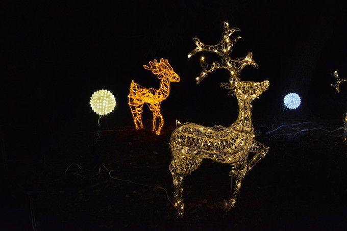 京都府立植物園 クリスマスイルミネーション