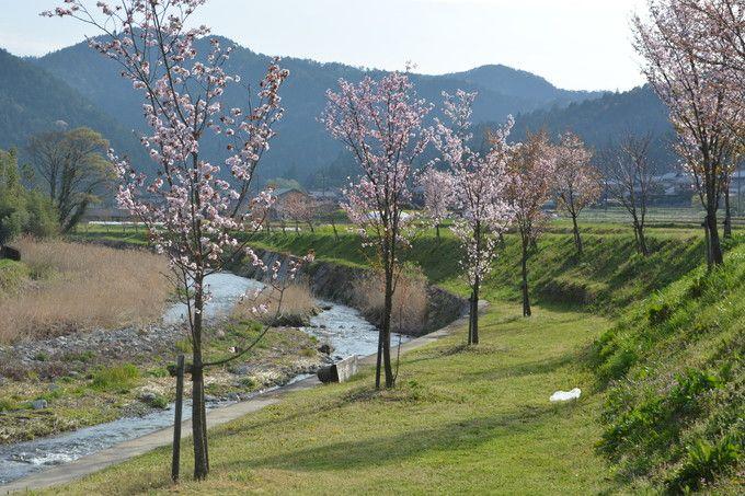 のんびり歩ける清流(高野川)沿いの散策路