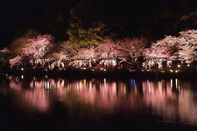 洛東 平安神宮神苑ライトアップ