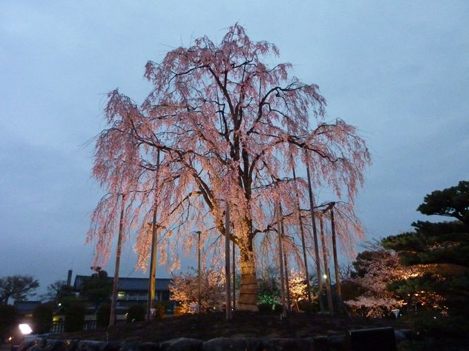 洛南 東寺境内ライトアップ