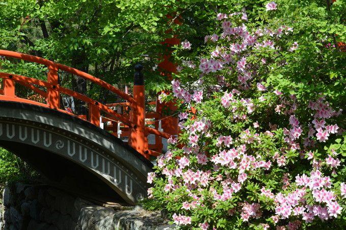 境内では初夏の花も咲いている