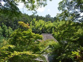 京都嵯峨野で一押し!初夏の新緑が美しい5つの寺院