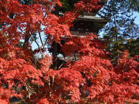 見事な紅葉!京都の世界遺産「仁和寺」の錦秋の色彩を見逃すな