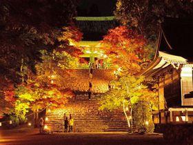 """京都""""ゆっくり落ち着いて見学できる""""紅葉ライトアップ5選"""