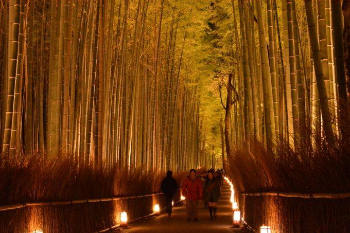 幻想的な竹林の道(ちくりんのみち)