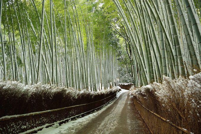 近くの「渡月橋」、「竹林の道」の雪景色も、見逃せないぞ