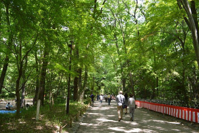京都御苑から出発して下鴨神社へ