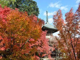 京都嵯峨釈迦堂(清凉寺)は紅葉など四季の風景・行事が魅力!