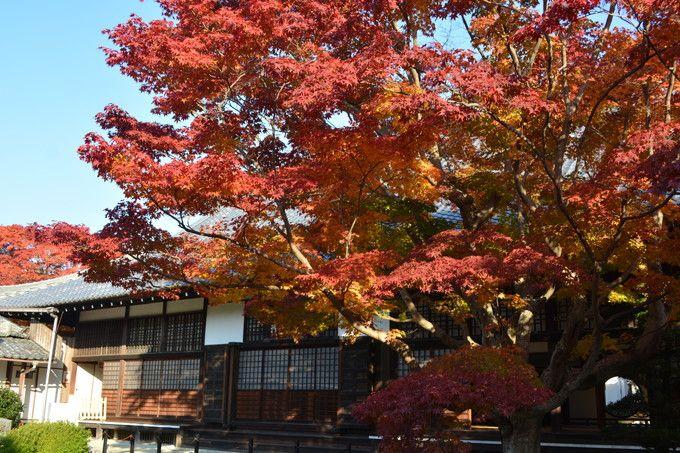 秋:何と言っても紅葉が素晴らしい源光庵