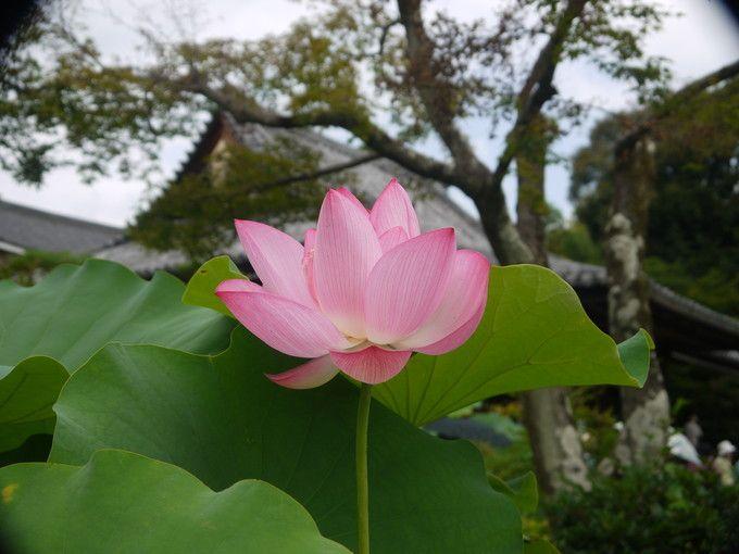 初夏から花々が咲き誇る夏景色