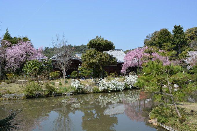 待賢門院桜が見事な春景色