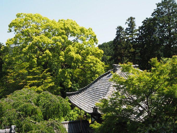 京都西山「十輪寺」の四季の風景は訪れた人の心に残るぞ!