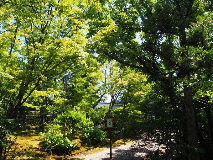 国宝、菩提樹、沙羅双樹など見どころいっぱい
