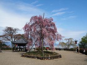 京都西山「善峯寺」の四季折々の花景色は見ごたえあり!
