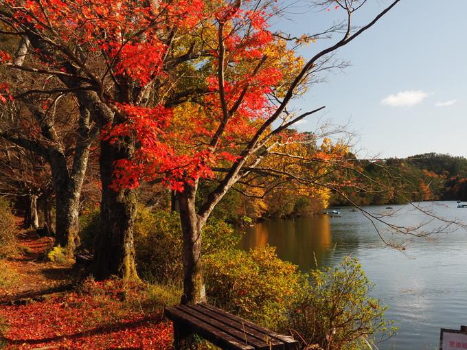 ハイキングルート4 嵐山・高雄パークウェイの菖蒲谷池駐車場から京見峠経由