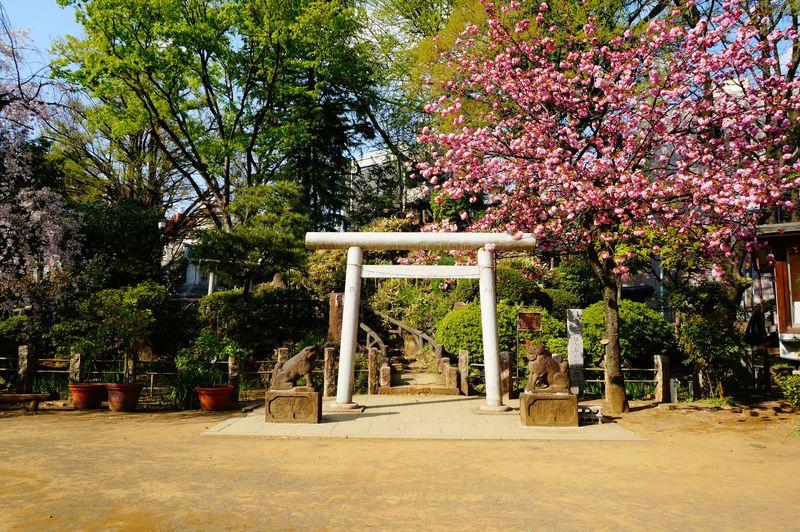 おみくじも御朱印帳もかわいすぎ!東京「鳩森八幡神社」は女子力UPのパワースポット