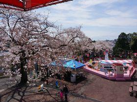 桜と水平線を一望!茨城県日立市かみね公園は花見もできる遊園地
