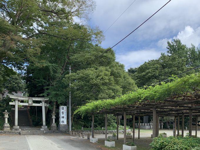 文化財にも触れられる拝島日吉神社