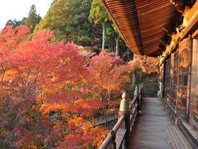 北播磨を代表する紅葉スポット!播州清水寺で晩秋を満喫すべし!
