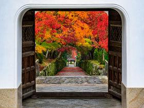 曹洞宗の名刹・宇治の興聖寺は紅葉も境内も見どころたっぷり